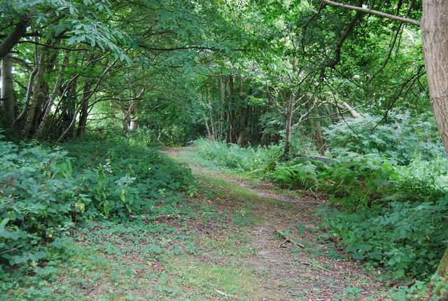 Footpath in Brede High Wood