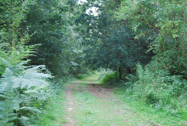 Footpath, Brede High Wood