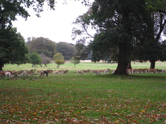 Deer in Holkham Park