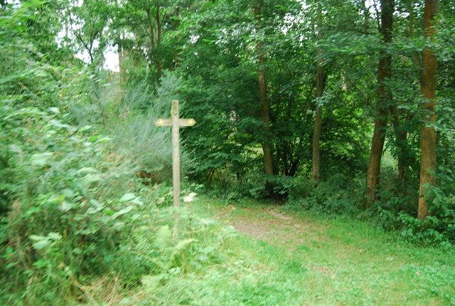 Footpath junction, Brede High Wood