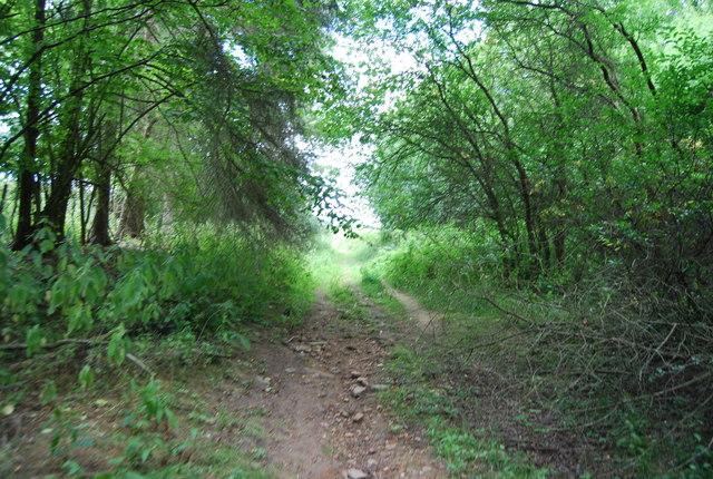 Footpath, Brede High Wood
