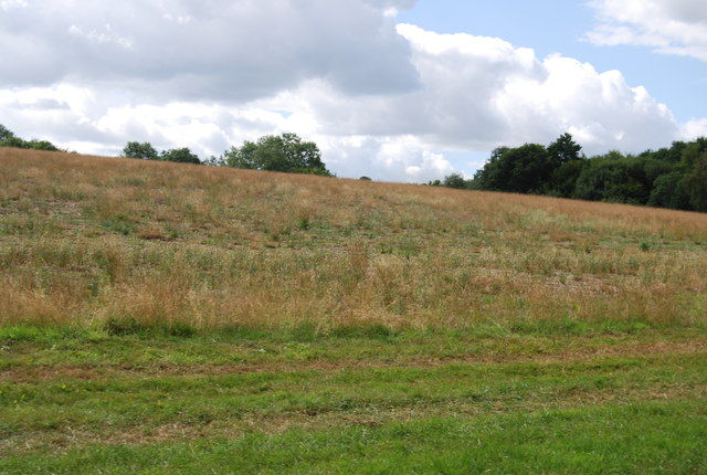 Grassland south of Brede High Wood