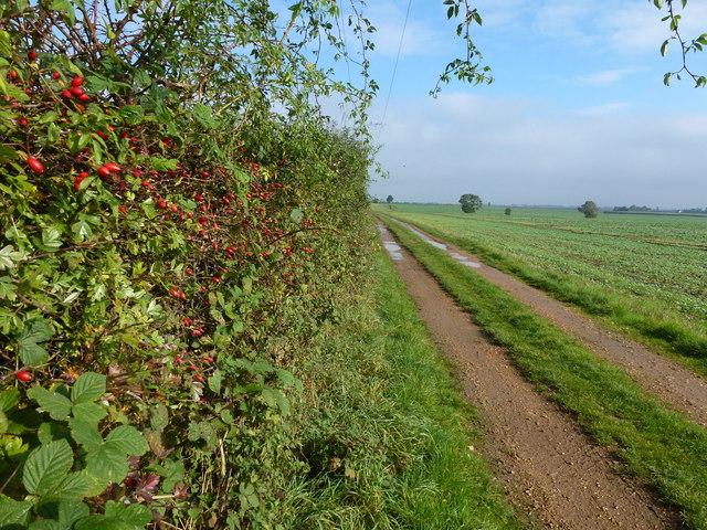 Public footpath next to RAF Wyton
