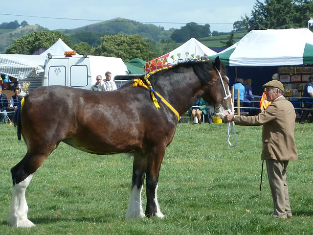 Horse at Llanfair Show