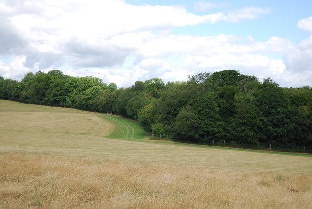 Woodland near Great Sanders