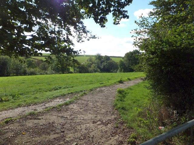 Grassland near Coombe House