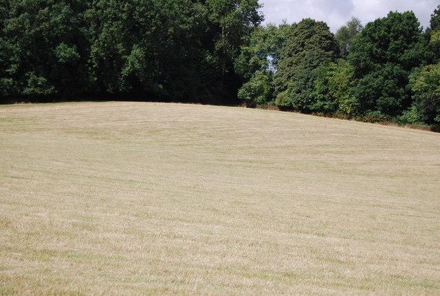 Grassland near Cinderbank Shaw