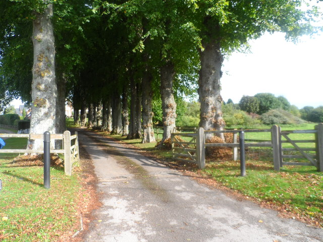 Tree-lined lane to South Downs
