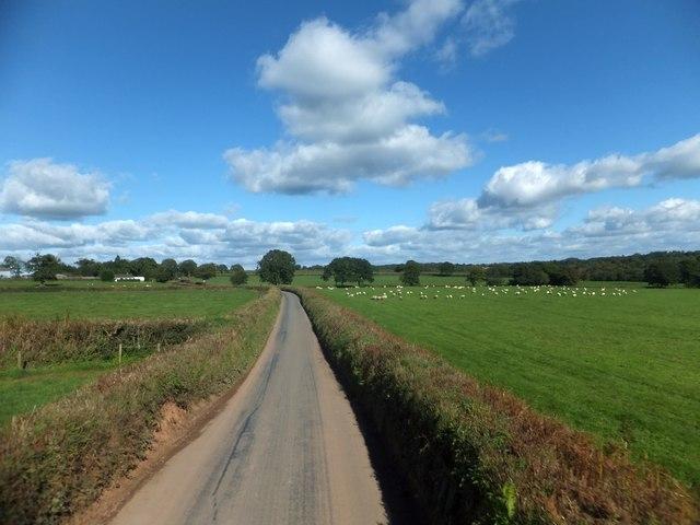 Fields between Nomansland and Buddleswick