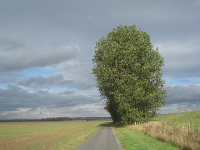 Trees by the road to Faxfleet Grange