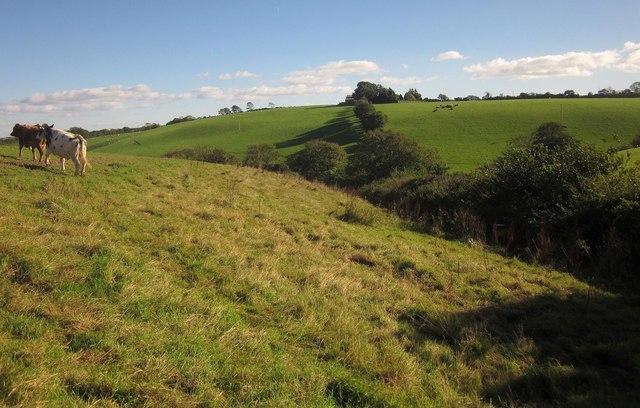Fields east of Blunts