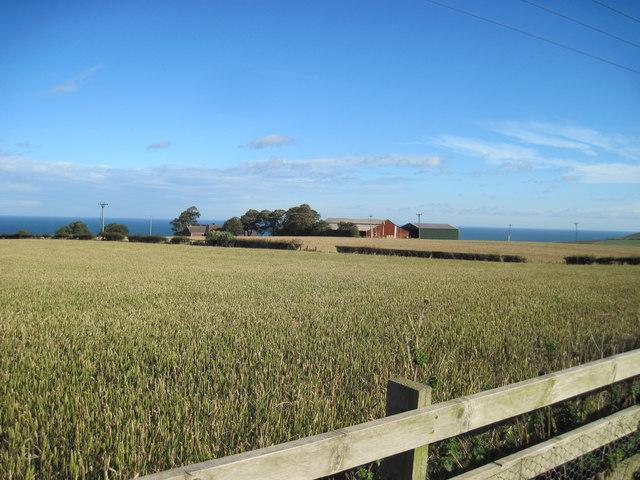 Fields  of  Wheat  in  October