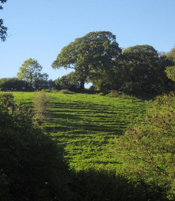 Terracettes near Furslow Farm