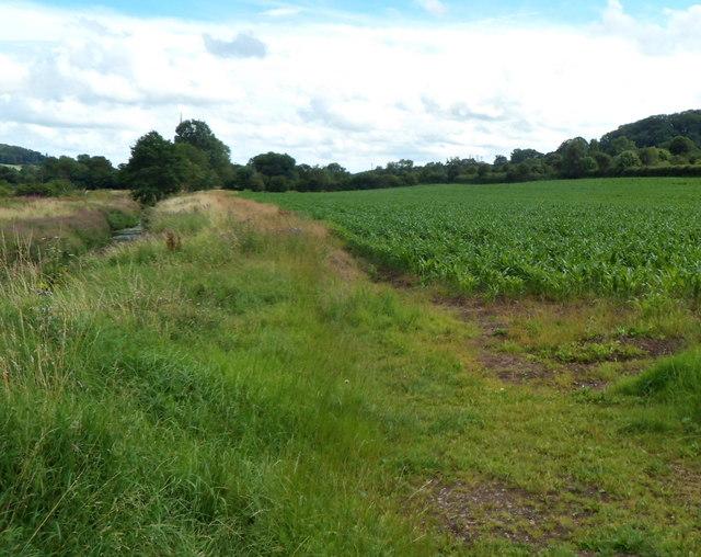 Riverside field in Hinton