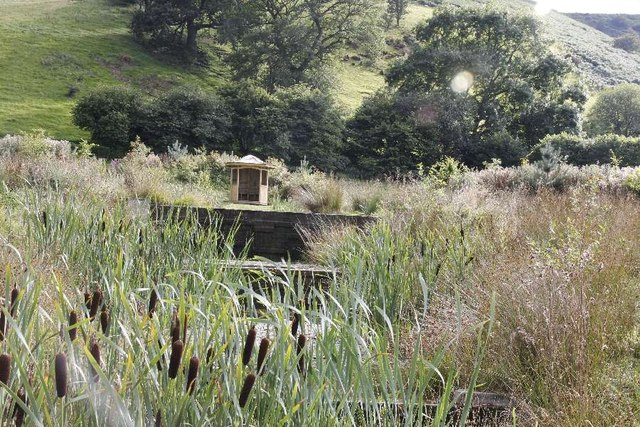 Bulrushes in the ponds