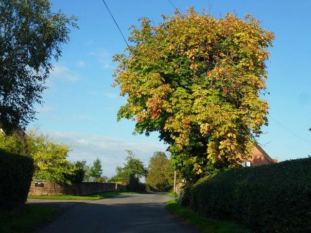 Autumn colour at The Durrance