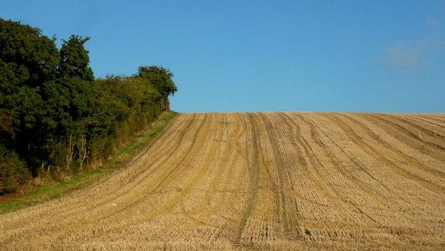 Stubble field in autumn, 1