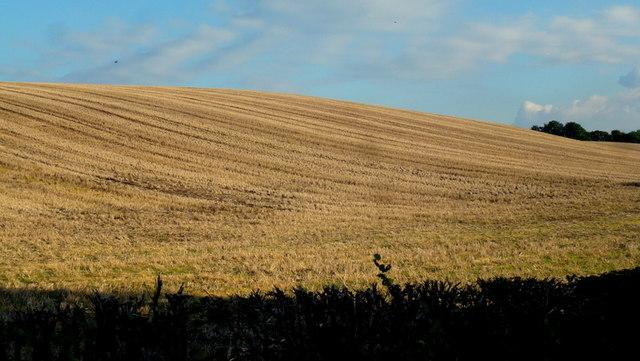 Stubble field in autumn, 2