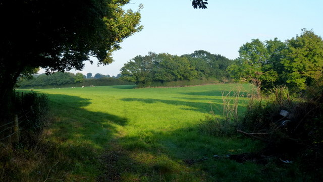 Footpath through pasture