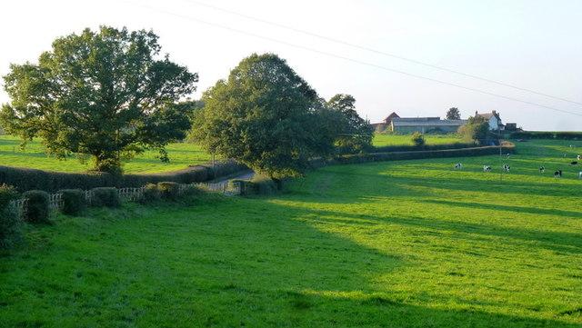 Farmland by Hockley Brook Lane
