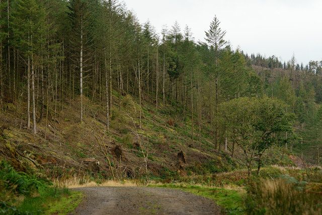 Woodland Above 'Whistling Curve'