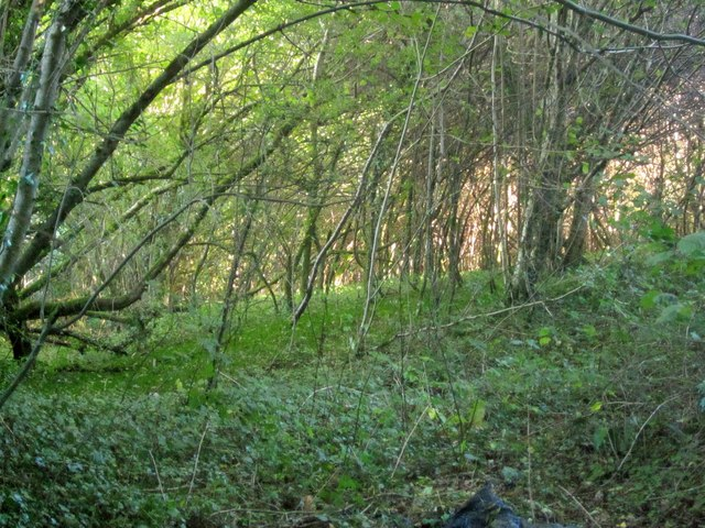Woodland near Enquire-the-way