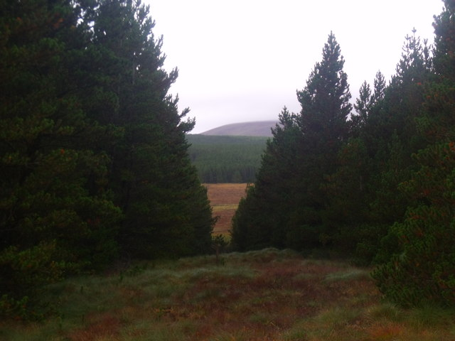 Break in forestry on Cnoc an Doire near Crask Inn, Sutherland