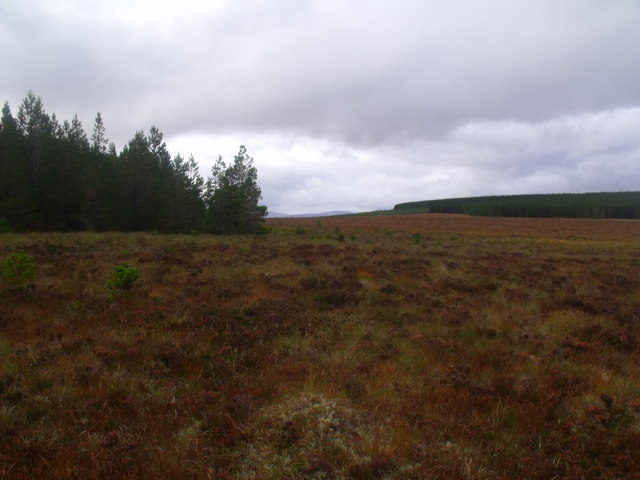 Corner of forest plantation on Cnoc an Doire near Crask Inn, Sutherland