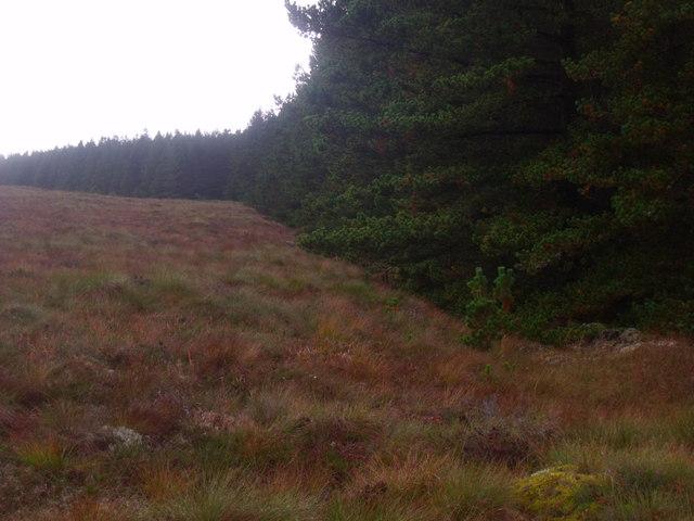 Forest edge on Cnoc an Doire near Crask Inn, Sutherland