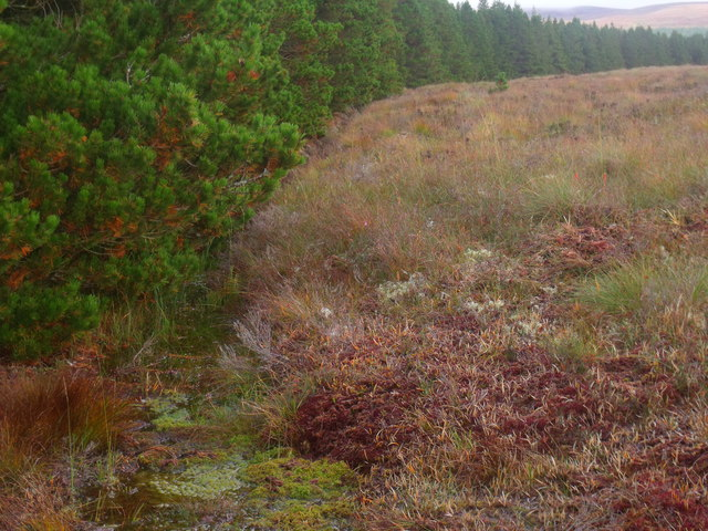 Drainage by forest edge on Cnoc an Doire near Crask Inn, Sutherland
