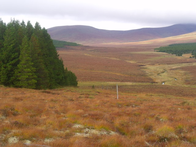 Edge of forest plantation on Cnoc an Doire near Crask Inn, Sutherland