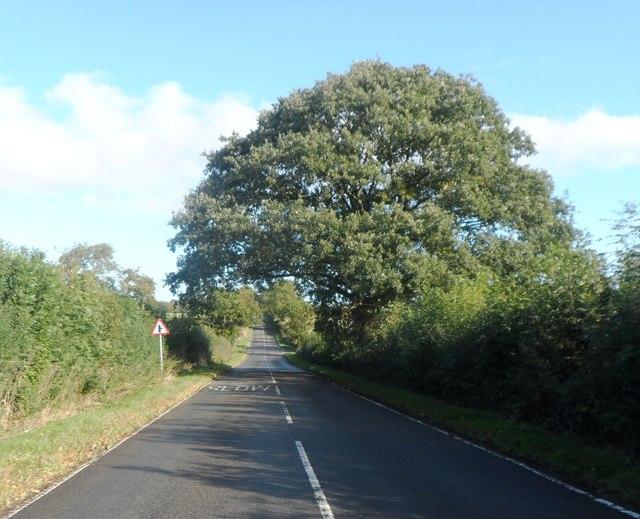 Large tree on the B4115