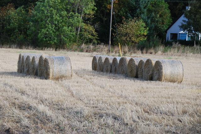 Rolls of hay in a field of stubble