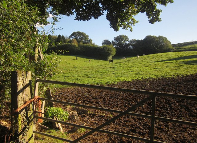 Cattle pasture, Enquire-the-way