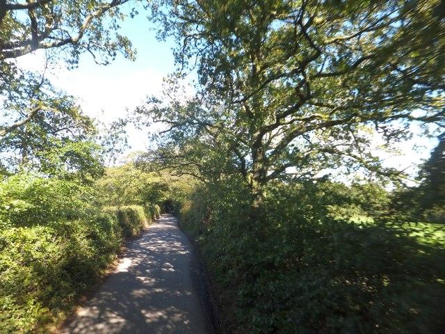 Trees and hedgebanks on Witheridge Moor