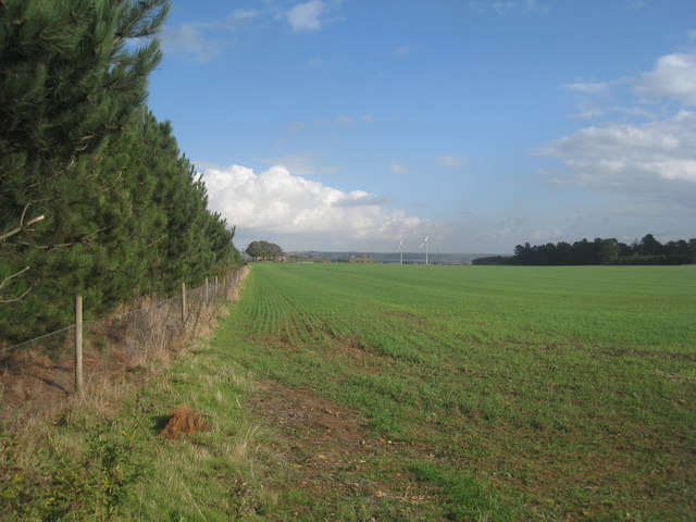 View alongside Thorne Holt towards Risby Warren Farm