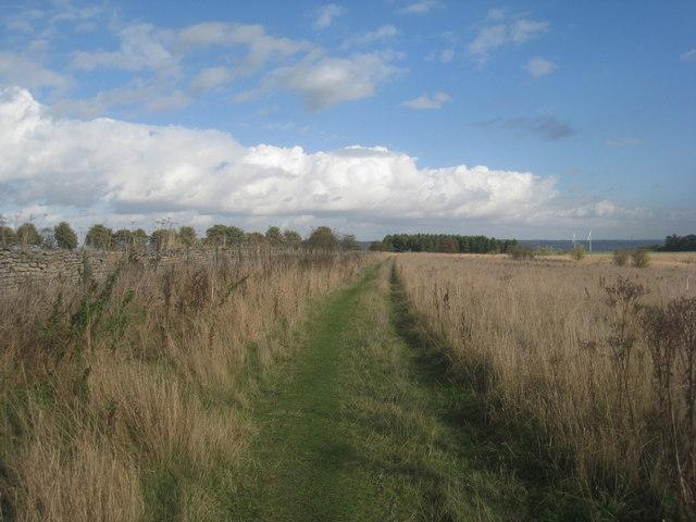 Bridleway on Risby Warren