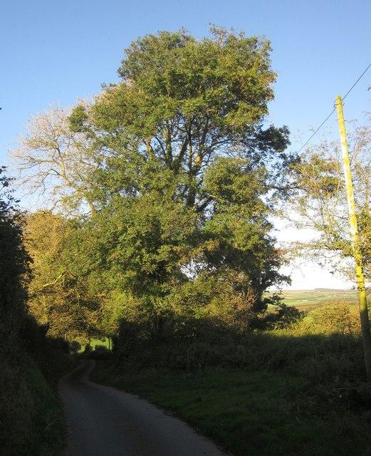 Lane below Trebrown