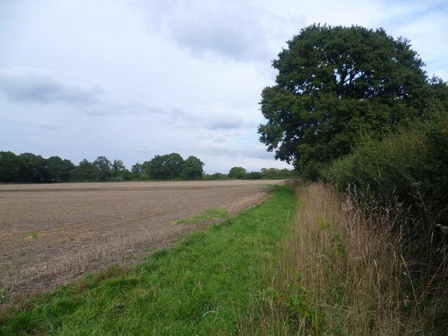 Field edge near Brissenden Farm