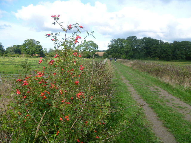 Bridleway towards Hammer Stream