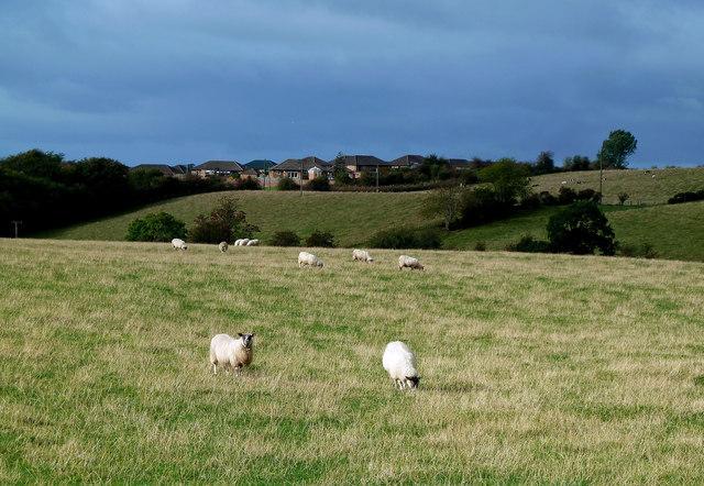 Farmland Near Mossblown