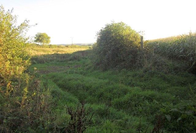 Field by the path near Blunts