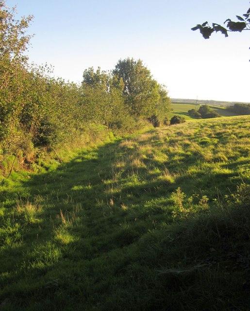 Pasture near Blunts