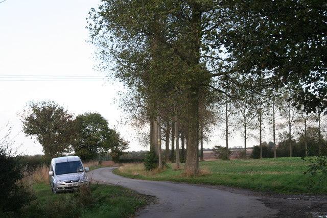 Poplars along Thoroughfare