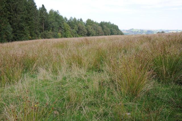 Rough grazing land above Pont Llogel