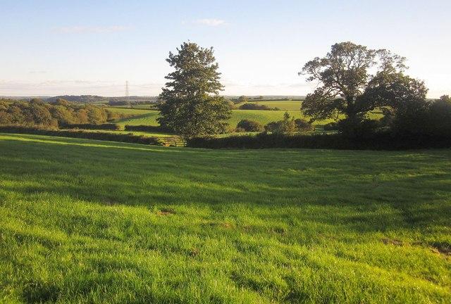 Field west of Blunts