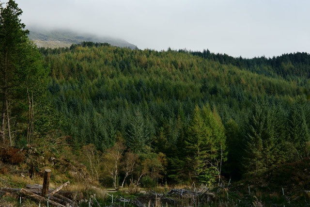 Woods Above Tan-y-Bwlch