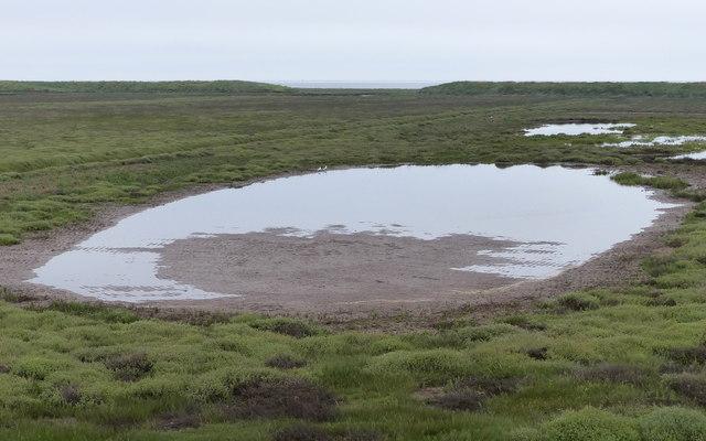 Salt marsh at Freiston Shore Nature Reserve