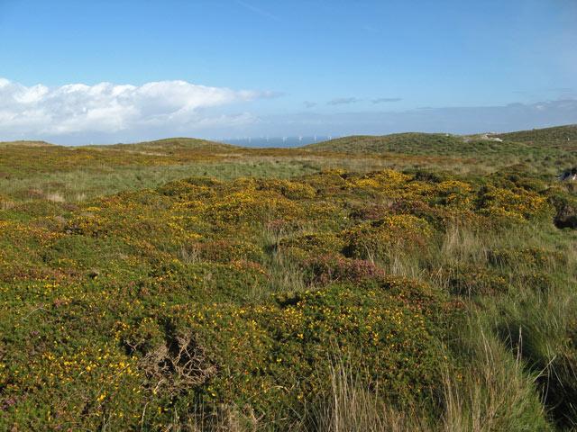 Orme heathland