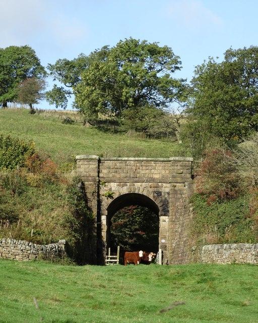 Cattle under a railway bridge near Malcoff